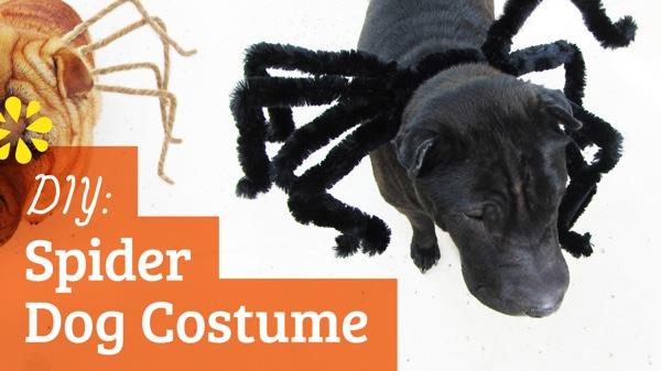 Homemade female dog costumes - photo#11